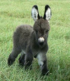 Jan's Page of Awesomeness! >. - pets-ftw: Little Donkey