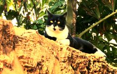 Israel has the best collection of mustache and goatee black and white alley cats. Florentine area Tel Aviv. (barring the ones with H1tler mustaches - that is not cool)