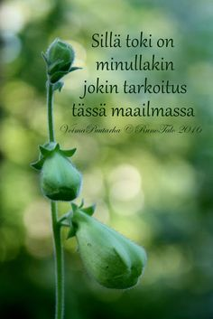 Sellainen maailma    jossa kaikilla on hyvä olla    jossa kukaan    ei joudu kapeille ahtaille kujille kulkemaan    vaan jokais... Finnish Words, Affirmation Cards, Happy Vibes, Spiritual Path, Live Life, Sentences, Affirmations, Motivational Quotes, Spirituality
