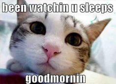 cat humor | Good Morning - Cat humor