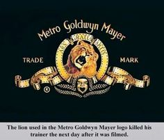 The Metro Goldwyn Mayer Lion Logo Metro Goldwyn Mayer Logo, Weird Facts, Fun Facts, Random Facts, Strange Facts, Pointless Facts, Unusual Facts, Rain Man, Mgm Lion