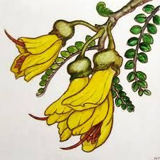 Image result for pohutukawa flower drawing