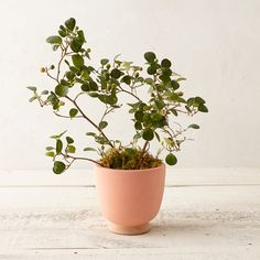 Chalked Clay Urn, Small in Garden Indoor Planters at Terrain