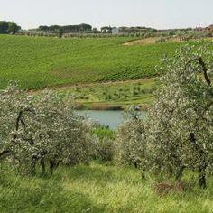 Olivenbäume - Natur Urlaub mit ReNatour