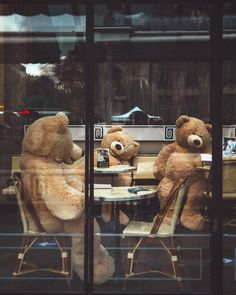 Tedy Bear, Photo Action, Paris Street, Videos, Wander, This Is Us, France, In This Moment, Photo And Video
