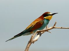 Uccelli = Bird in Italian