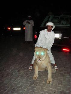 yeah boi! ride that lion!