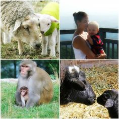 """There Is No Difference: An animal is not an """"it"""" or a """"what."""" An animal is a he  or a she or a who. More here: http://www.peta.org/living/animal-friendly-fun/there-is-no-difference.aspx #animalrights #equality #love"""