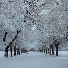 Winter in Platt Fields Park, Manchester, UK. Photo by Asim Shahzad Manchester Park, Manchester England, Manchester Snow, Beautiful World, Beautiful Places, Beautiful Scenery, Tree Tunnel, Tree Tops, Winter Beauty