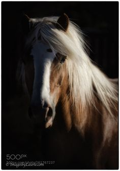 Into the Light by imagesbylaurie #animals #animal #pet #pets #animales #animallovers #photooftheday #amazing #picoftheday