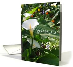 Greek sympathy card with white calla lillies card. Personalize any greeting card for no additional cost! Cards are shipped the Next Business Day. Product ID: 1085128 Sympathy Cards, Greeting Cards, Greek Easter, Calla Lillies, Thank You Cards, Holiday Cards, All Things, Plant Leaves, Greece