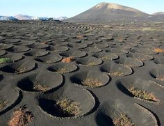 "visitheworld: "" La Geria wine district on the lava fields of Lanzarote Island, Spain (by de kist). Lanzarote is pretty amazing for how resourceful it is. This is an island with NO. Tenerife, Great Places, Places To See, Beautiful World, Beautiful Places, Reisen In Europa, Voyage Europe, Canary Islands, Spain Travel"