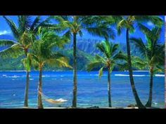 Let's talk a little bit of palm trees. Palm trees usually live in tropical and subtropical climate zones. Palm tree photos and types are in this photo gallery. Kauai Hawaii, Oahu, Hawaii Honeymoon, Hawaii Landscape, Palm Trees Beach, Beach Images, Pictures Images, Photos, Landscape Wallpaper