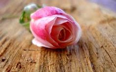 Pink Rose Wallpapers HD Pictures Flowers One HD Wallpaper Pink Rose Wallpaper Wallpapers)