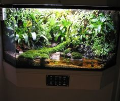 Nice mossy viv with water feature