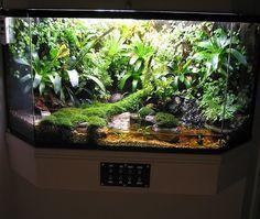 Nice mossy viv with water feature Aquarium Terrarium, Planted Aquarium, Turtle Terrarium, Gecko Terrarium, Terrarium Plants, Aquarium Fish, Frog Habitat, Reptile Habitat, Reptile Room