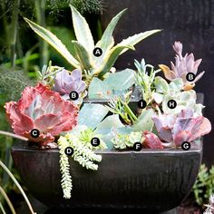 Succulent Container Garden Plans - Grow succulents in containers for easy-care color in any sunny, dry site.