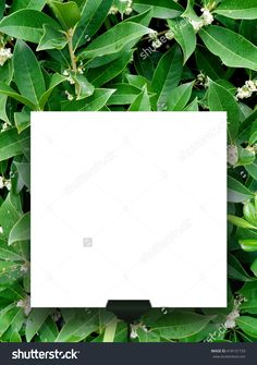 Close-up of one square blank frame supported by clip against green lush foliage background