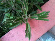 Crece planta, crece, llena de vida mi hogar