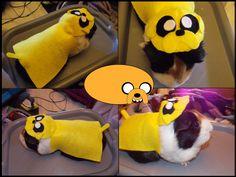 Jake the Dog Guinea Pig Costume by ~OreoTnettenbaSnood on deviantART