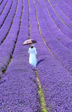 Wow!  To walk in a field of purple...