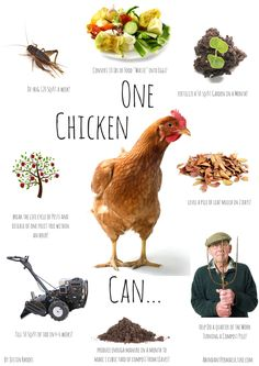 gardening with chickens poster