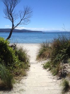Adventure Bay, Bruny Island. Bruny Island, Garden Mural, Tasmania, Oceans, Pathways, Vacation Spots, Rivers, Bridges, Traveling By Yourself