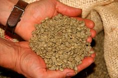 Green coffee beans have supplied a new player in the antioxidant arena. An extract of green coffee beans has been found to have a stronger a. Netflix Gift Card, Coffee Health, Green Coffee Bean Extract, Dog Food Brands, Black Coffee, Coffee Coffee, Coffee Shops, Morning Coffee, Coffee Drinkers