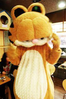 Cat Cafe Mascot - Garfield, South Korea Cat Cafe, South Korea, Cats, Gatos, Kitty Cats, Cat, Kitty, Serval Cats, Kittens