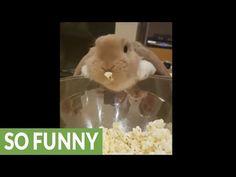 Bunny discovers the exhilarating joy of eating popcorn - http://blog.clairepeetz.com/bunny-discovers-the-exhilarating-joy-of-eating-popcorn/