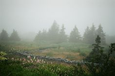 Newfoundland, mist and flowers