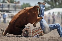 Now that's steer wrestling! Rodeo Cowboys, Real Cowboys, Cheyenne Rodeo, Cheyenne Frontier Days, Wyoming Vacation, Cowboys And Angels, Rodeo Life, Bull Riders, Country Music Stars