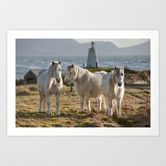 Three ponies Art Print by Rory Trappe - $22.88
