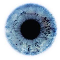 human eye, macro, by Rankin (Eyescapes series) John Rankin, Eye Color Chart, Puppy Flowers, Fotografia Macro, 3d Texture, Human Eye, Doll Eyes, Eye Art, Blue Eyes