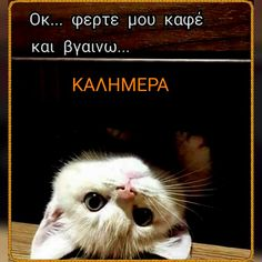 Cute Baby Animals, Good Morning, Cute Babies, Beautiful Pictures, Thankful, Cats, Funny, Happy, Movie Posters