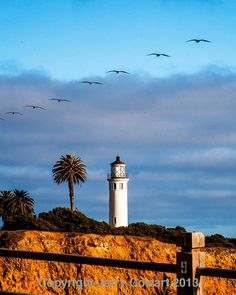 Lighthouse Fine Art Photography Seagulls in by PhotosbyJerryCowart, $38.50