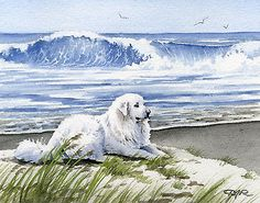 Great Pyrenees at the Beach 11 x 14 Dog Art Print Signed by Artist DJR