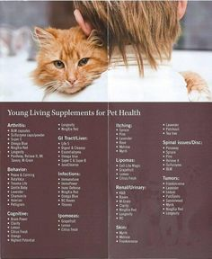 Young Living Essential Oils: Pet Health