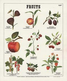 Deyrolle - Fruits I | Auction.fr