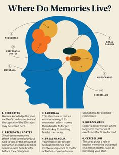 Here's How the Brain Makes Memories—and What You Can Do to Keep Your Mind Sharp Human Memory, Brain Memory, Brain Facts, Facts About The Brain, Brain Science, Forensic Science, Brain Gym, Science Education, Physical Education