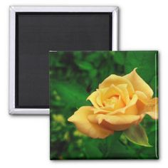 Picture of a yellow rose take in early summer, multiple sizes are available. Great for home or office decor. Also a great gift idea for holidays, birthdays, anniversary, and house warning.