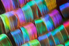 Close up of a moth's wing. #insects #moth #iridescent