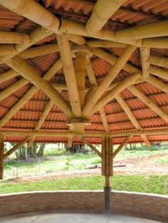 Bambu é a aposta para arquitetura sustentável no Distrito Federal
