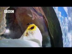 A true Bird's Eye view - Super Cool