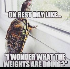 Don't miss me too much Gym I'll be back in 1 day! - Humor shirts - Ideas of Humor Shirts - Don't miss me too much Gym I'll be back in 1 day! Crossfit Humor, Gym Humour, Workout Humor, Workout Quotes, Exercise Quotes, Crossfit Quotes, Exercise Humor, Crossfit Chicks, Fitness Motivation