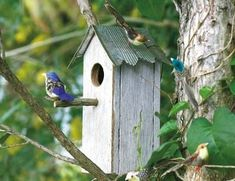 This DIY birdhouse is made of old fence pickets, a fruit can, and a tree branch clipping. #howtobuildabirdhouse