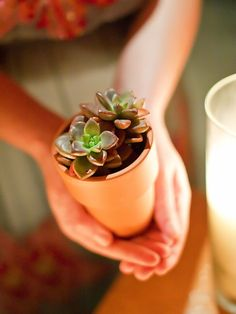 #succulent  Photography: