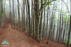 #треккинг в испании - #catalonia #montseny #испания #горы #осень #туризм #природа