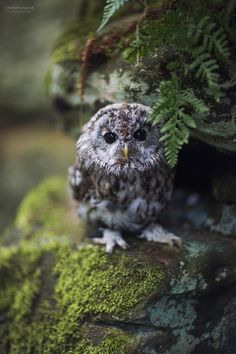 Little owl in the green forest Owl Photos, Owl Pictures, Animals And Pets, Baby Animals, Cute Animals, Beautiful Owl, Animals Beautiful, Owl Bird, Pet Birds