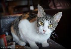 Dyrebeskyttelsen Norge Nord Jæren -  Villkatten Alice trenger et godt og kjærlig hjem med omsorg og godt stell foralltid ;)